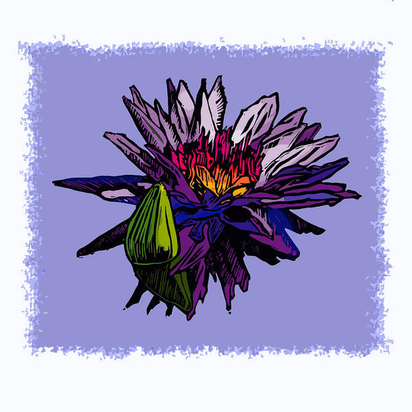 Water Lily Art Print featuring the drawing Purple Water Lily by John Lautermilch