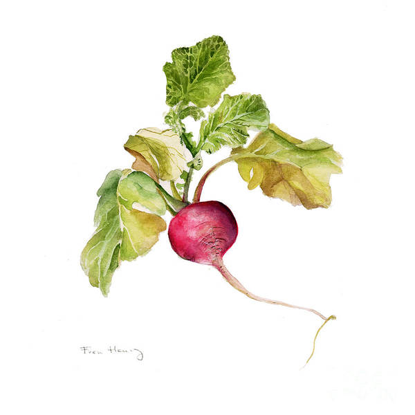 Square Art Print featuring the painting Radish by Fran Henig