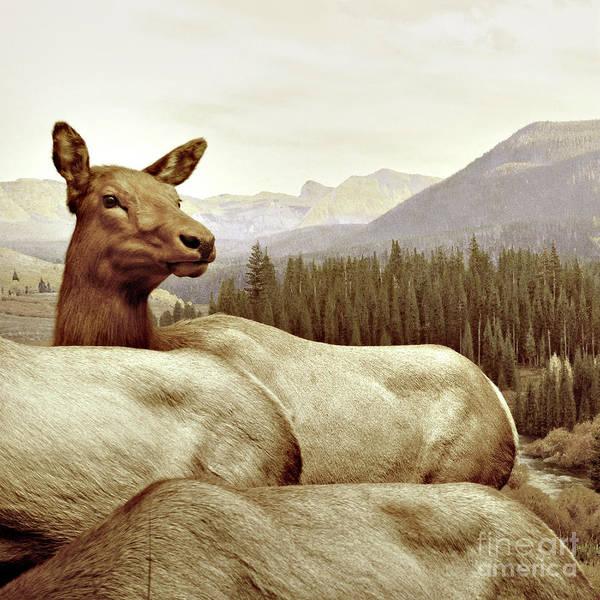 Deer Art Print featuring the photograph Resting Deer by Zena Zero