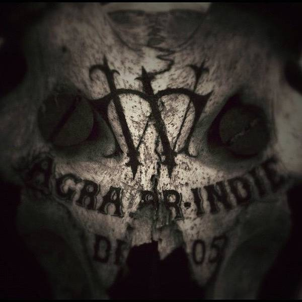 Sevendead Art Print featuring the photograph Skull by Dave Edens
