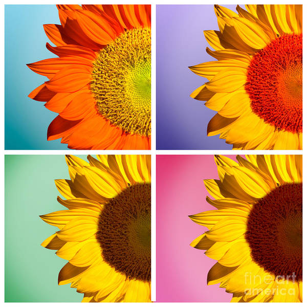Sunflowers Art Print featuring the photograph Sunflowers Collage by Mark Ashkenazi