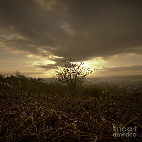 Malvern Art Print featuring the photograph The Lonely Bush by Angel Ciesniarska