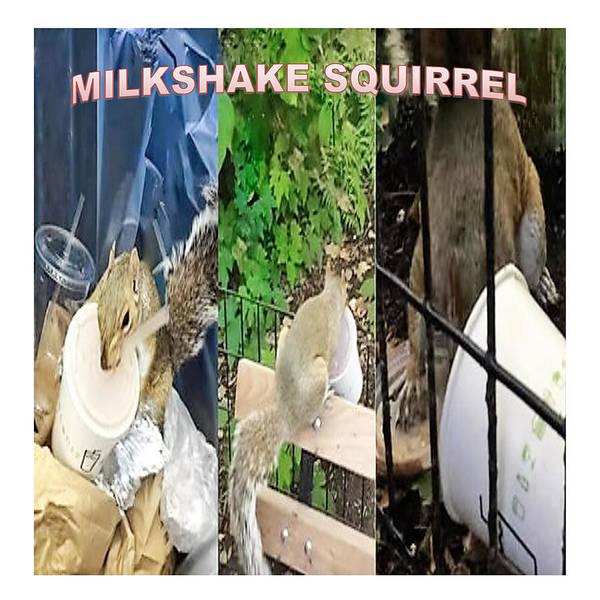 Milkshake Squirrel Art Print featuring the digital art The Original Official Milkshake Squirrel by Ronald Savage