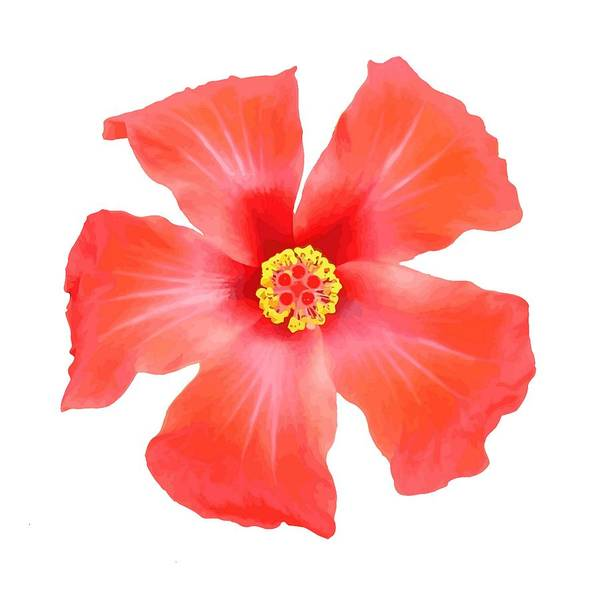 Hibiscus Art Print featuring the digital art Tropical Hibiscus Flower Vector by Taiche Acrylic Art