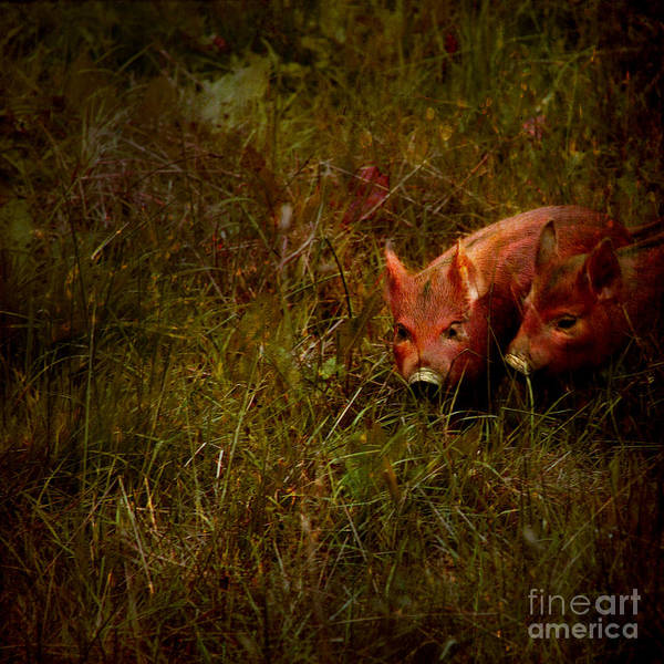 Piglets Art Print featuring the photograph Two Piglets by Angel Tarantella