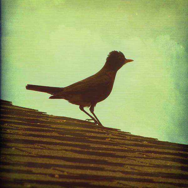 Robin Print featuring the photograph Up On A Roof by Amy Tyler