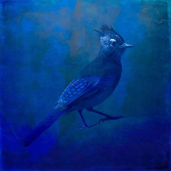 Nature Wildlife Birds Steller's Jay Abstract Impressionism Expressionism Minimalism Blue Indigo Ultramarine Colorado Art Print featuring the photograph Very Blue Jay by Tom Bradley