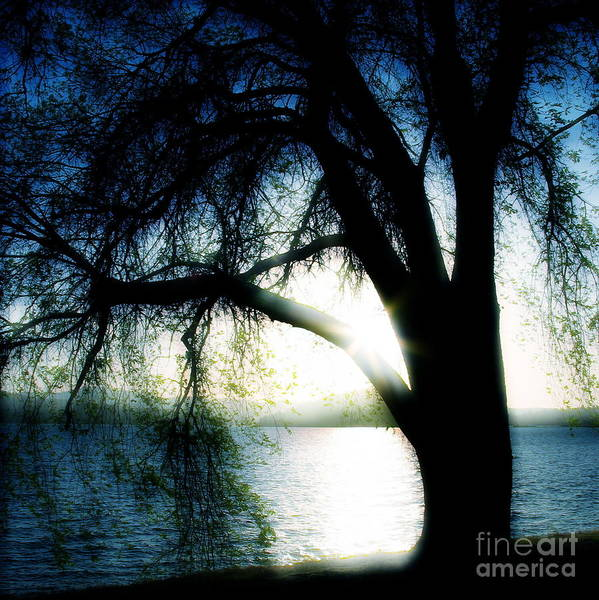 Weesping Art Print featuring the photograph Weeping by Idaho Scenic Images Linda Lantzy