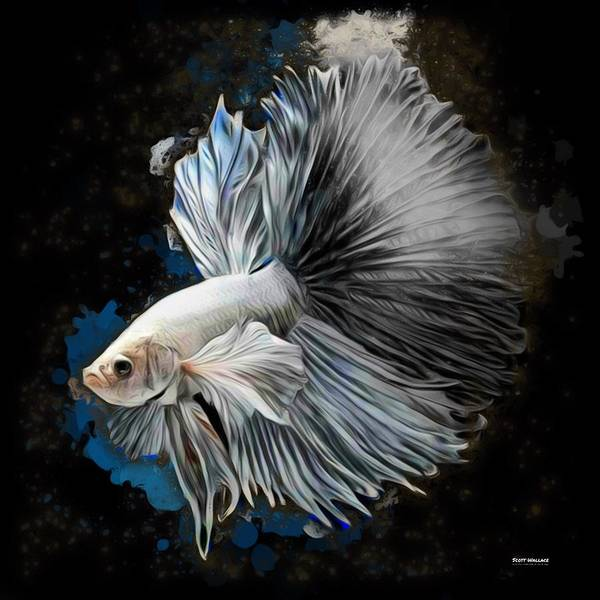 White Halfmoon Betta Fish by Scott Wallace Digital Designs