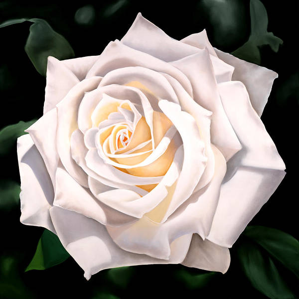 Flower Art Print featuring the painting White Rose by Ora Sorensen
