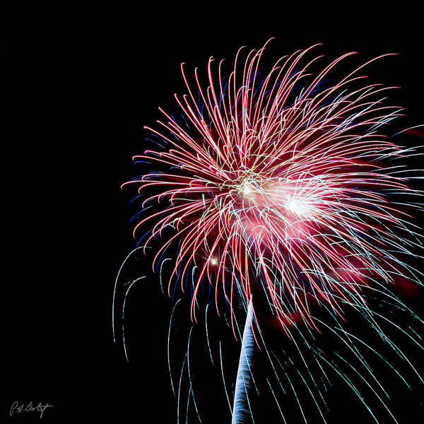 July 4th Art Print featuring the photograph Wild Sky Flower by Phill Doherty