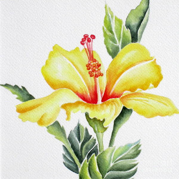 Hibiscus Art Print featuring the painting Yellow Hibiscus by Deborah Ronglien