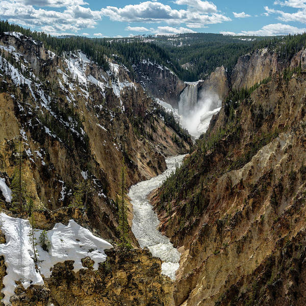 Lower Falls Art Print featuring the photograph Lower Falls In Yellowstone by Scott Read