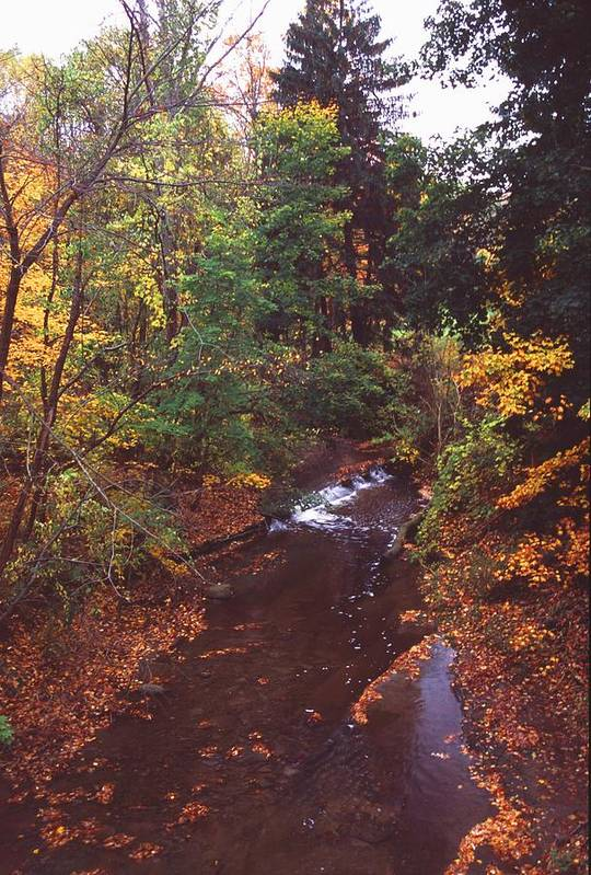 Stream Art Print featuring the photograph 102701-18 by Mike Davis