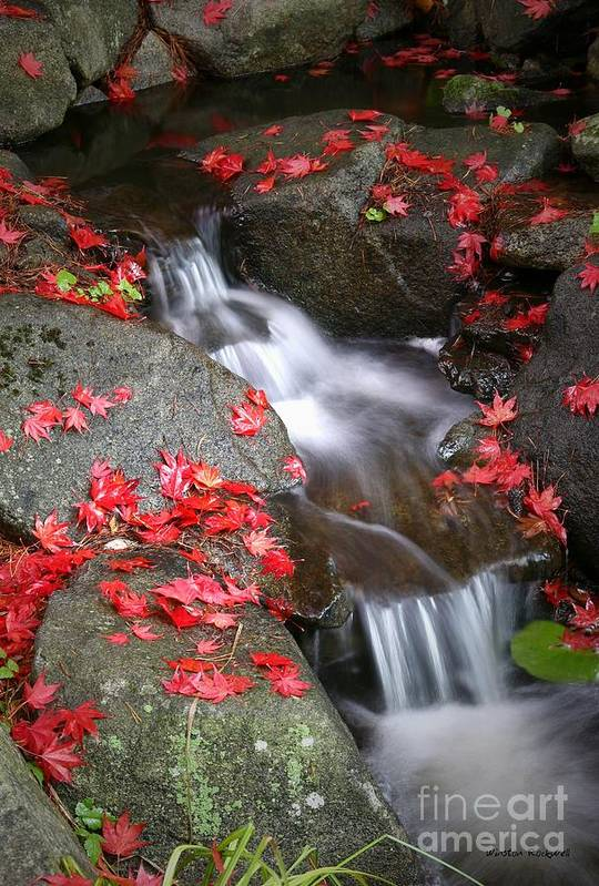 Autumn Stream Serene Tranquil Leaves Red Art Print featuring the photograph Serenity by Winston Rockwell
