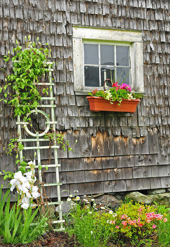 Flowers Art Print featuring the photograph Weathered Maine Seacoast Barn by Expressive Landscapes Fine Art Photography by Thom