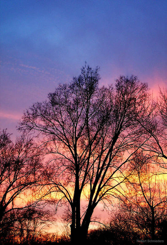 Tree Art Print featuring the photograph Sunset Tree by Robert Schnieders