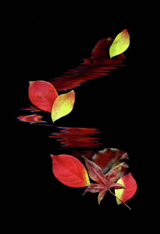 Abstract Art Art Print featuring the photograph Falling Leaves by Gerlinde Keating - Galleria GK Keating Associates Inc