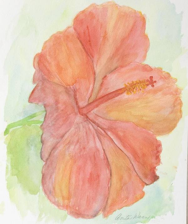 Flower Art Print featuring the painting Hibiscus by Anita Wann