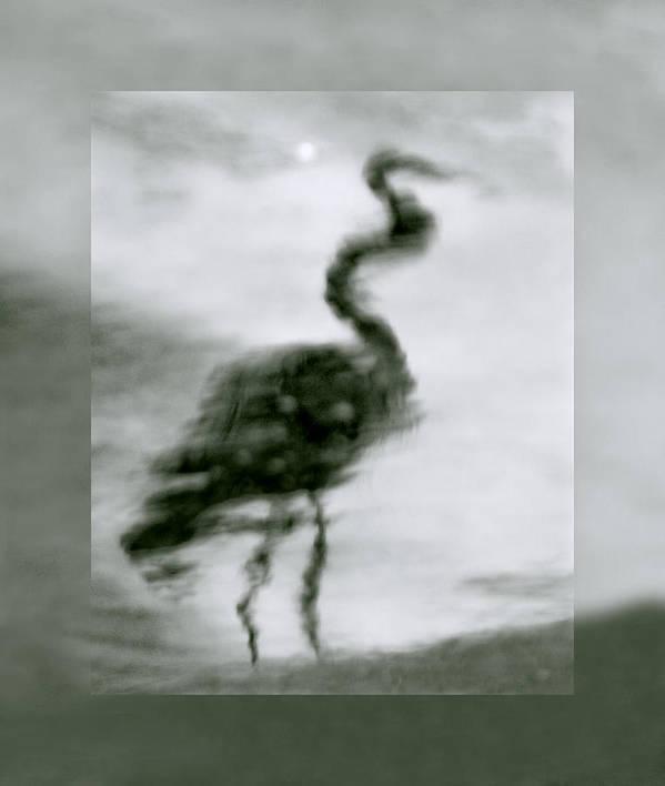 Great Blue Heron Art Print featuring the photograph Heron De Nacht by Linda McRae