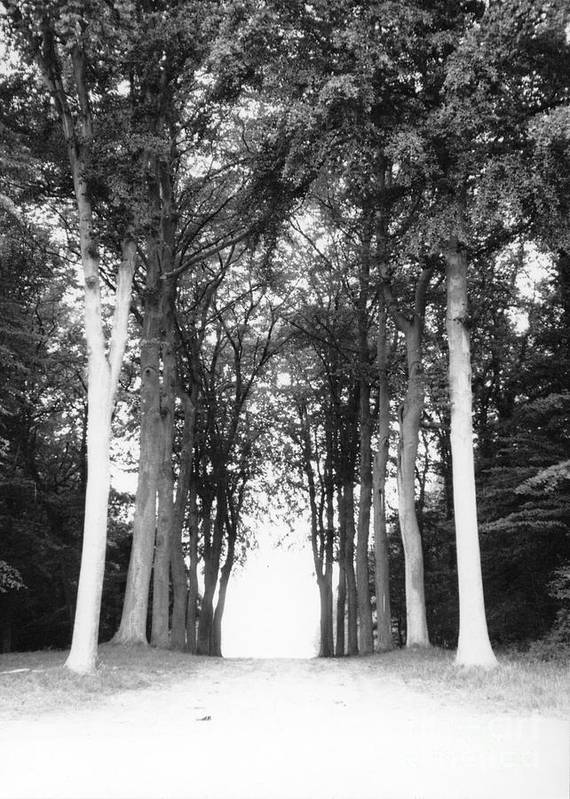 Trees Art Print featuring the photograph Tunnel Of Trees by Christine Jepsen