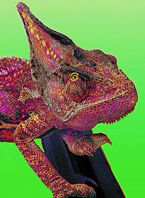 Veiled Chameleon Art Print featuring the digital art Pop Art Chameleon by L S Keely