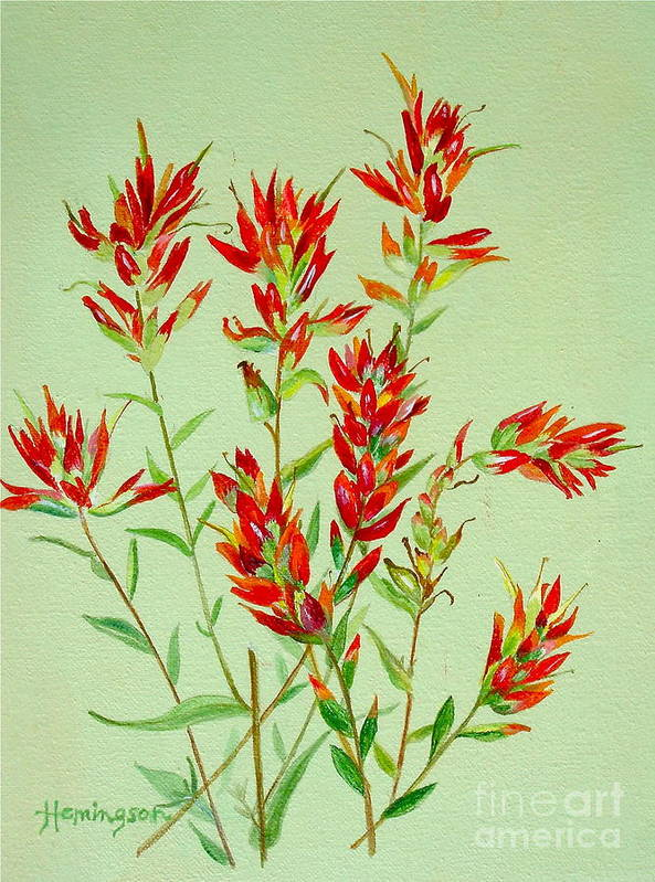 Indian Paintbrush Art Print featuring the painting Indian Paintbrush by Virginia Ann Hemingson