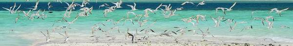 Scenics Art Print featuring the photograph Flock Of Seagulls By Azure Beach by Christopher Leggett