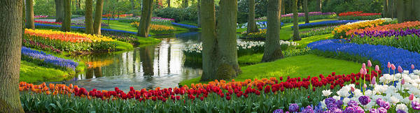 Scenics Art Print featuring the photograph Spring Flowers In A Park by Jacobh