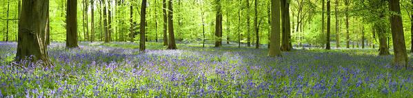 Scenics Art Print featuring the photograph Wonderful Woodland by Pkfawcett