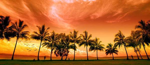 Landscape Art Print featuring the photograph Coconut Grove by Holly Kempe