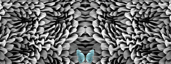Microscope Art Print featuring the photograph Blue Butterfly And Antenna by Sheri Neva