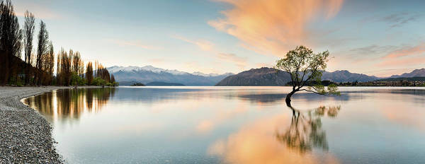 Tranquility Art Print featuring the photograph Wanaka - Lone Tree Sunrise At Lake by Kathryn Diehm