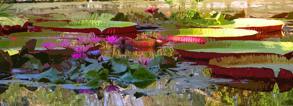 Water Lilies Art Print featuring the photograph Passion for Beauty by John Lautermilch