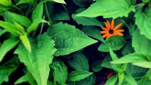 Flower Art Print featuring the photograph First flower by Joseph Ferguson