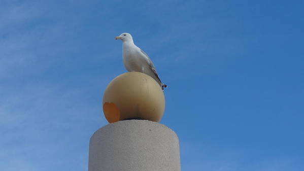 Seagull Art Print featuring the photograph On Top of the World by Jessica Cruz