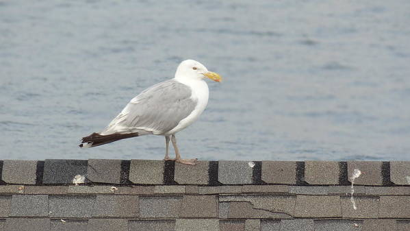 Seagull Art Print featuring the photograph Taking in the View by Jessica Cruz