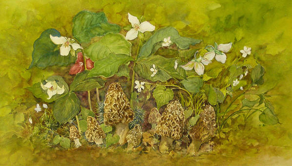 Mushrooms;trillium;spring;violets;woods;woodland;morels;watercolor Painting; Art Print featuring the painting Ready for Pickin' by Lois Mountz