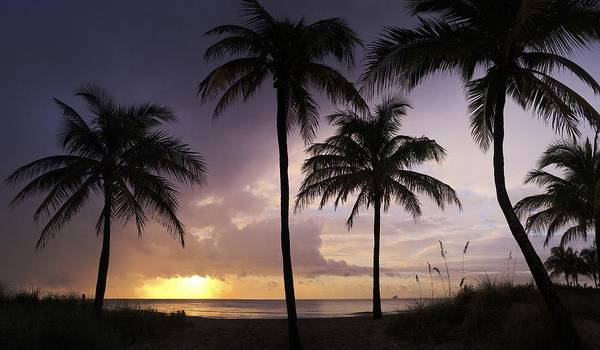 Palm Trees Art Print featuring the photograph Welcome Rain by Andrew Royston