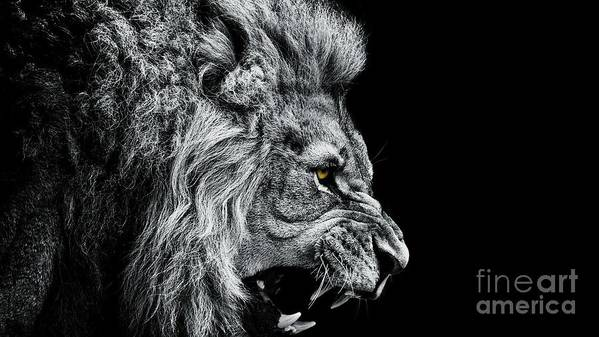Big Cat Art Print featuring the photograph Close-up Of Lion Roaring Against Black by Visuen Vengaroo / Eyeem