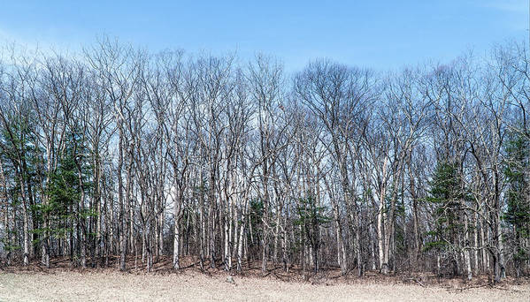 Nature Art Print featuring the photograph Poets Walk Park Trees by Tom Romeo
