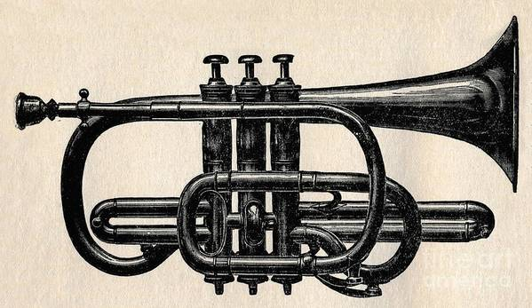 Music Art Print featuring the drawing The Cornet by Print Collector