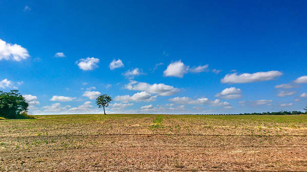 Scenics Art Print featuring the photograph The loneliness of the tree in the middle of the soy plantation in the rural area of Piracicaba. by CRMacedonio