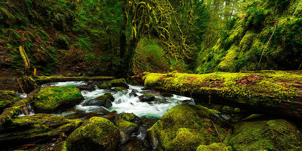 Northwest Art Print featuring the photograph American Jungle by Chad Dutson