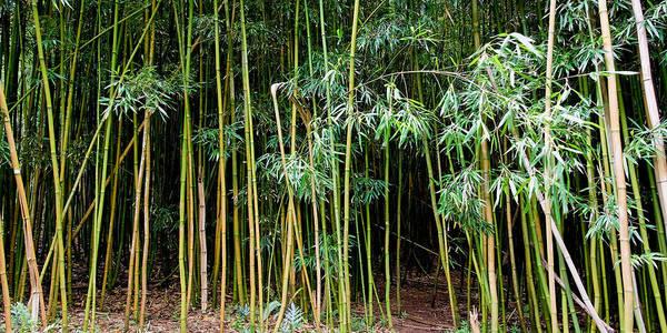 Bamboo Wind Chimes Art Print featuring the photograph Bamboo Wind Chimes Waimoku Falls trail Hana Maui Hawaii by Michael Bessler