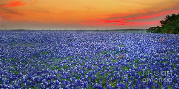 Texas Bluebonnets Art Print featuring the photograph Bluebonnet Sunset Vista - Texas landscape by Jon Holiday