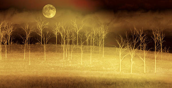 Landscapes Art Print featuring the photograph Only at Night by Holly Kempe