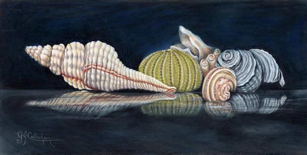 Seashell treasures 1 by Gloria Callahan