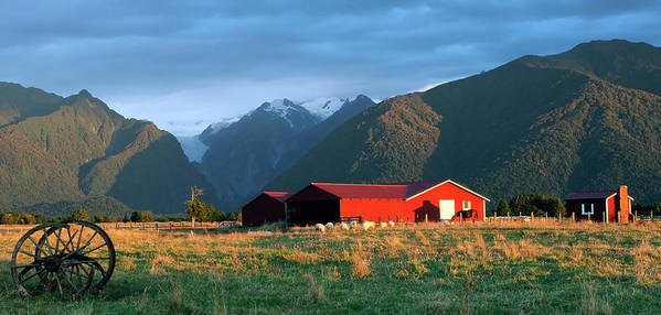 Horse Art Print featuring the photograph Fox Glacier Looms Over Plain by Dmathies