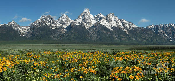 Landscapes Art Print featuring the photograph Grand Teton Summer by Sandra Bronstein
